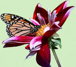Exotische bloem met vlinder