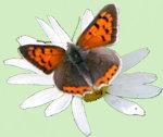 Mooie vlinder op witte bloem