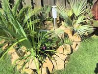 HDR foto van de vijver met exotische planten