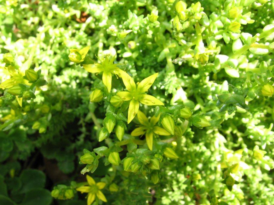 Frisse groene lente kleuren