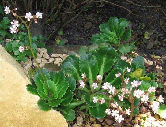 Nog meer bloemen in de lente