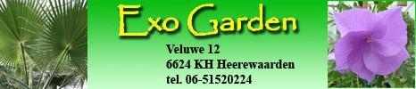 Welkom bij Exogarden, uw online shop voor exotische zaden en zaailingen.