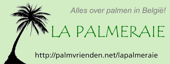 La Palmeraie. Alles over palmen in België en Nederland!
