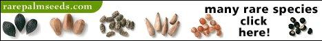 De link naar de Rarepalmseeds pagina. Hier zijn extreem veel verschillende soorten zaden te koop.