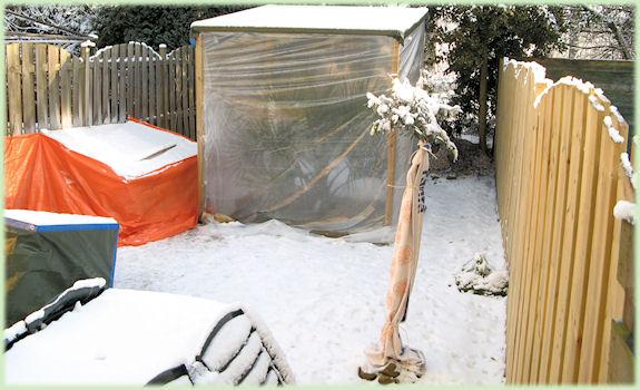 De besneeuwde tuin met alle beschermingen
