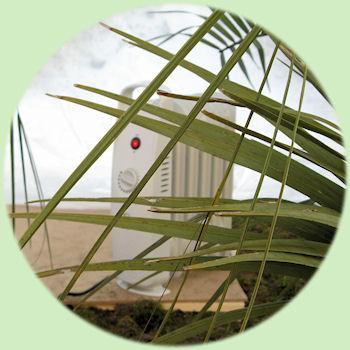de radiator kachel achter de Butia capitata