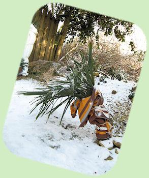 Beschermde Trachycarpus fortunei