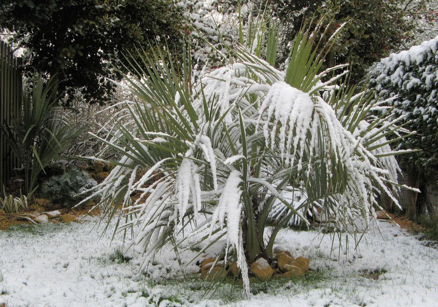 De gehele tuin in de sneeuw