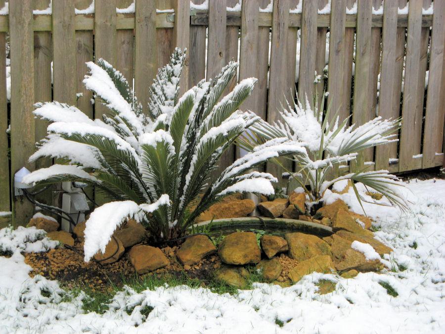 Exoten in de sneeuw
