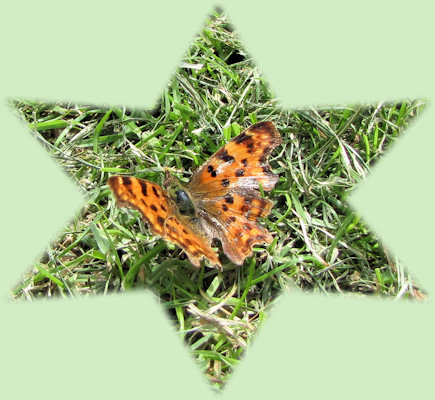 Ook vlinders zijn erg welkom in de tuin