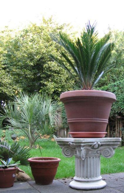 Opdeze foto is de tuin te zien, met op de voorgrond een prachtige nieuwe Griekse pilaar