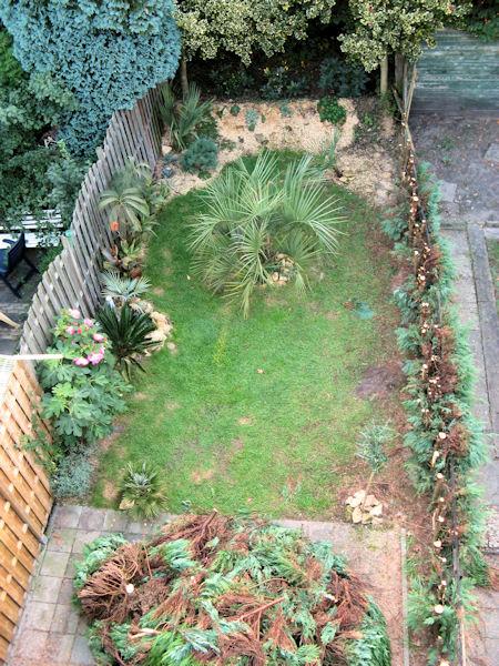 De tuin met conifeer stronken