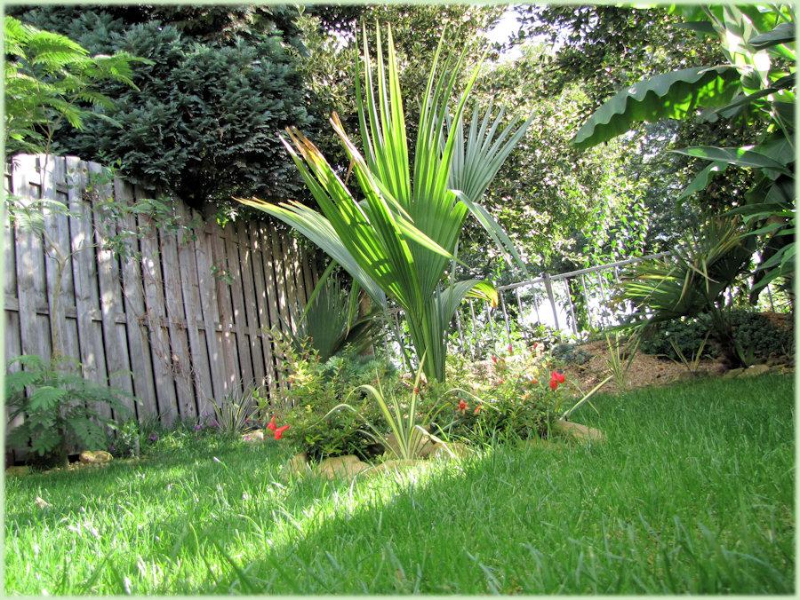 Een mooi plaatje van de tuin