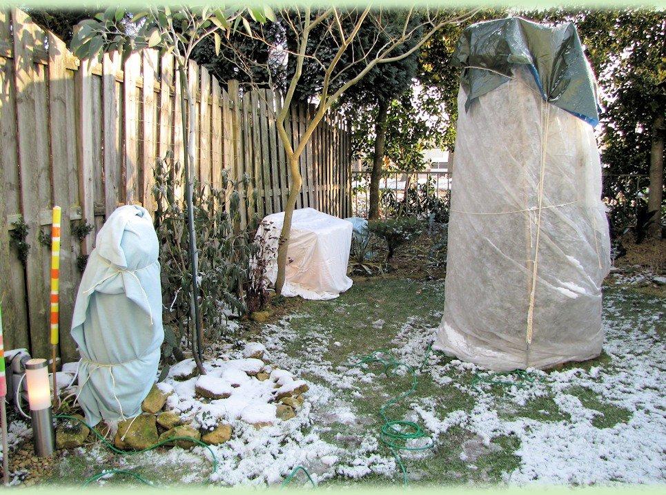 Mijn wintertuin december 2012