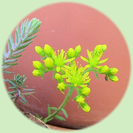Gele bloempjes