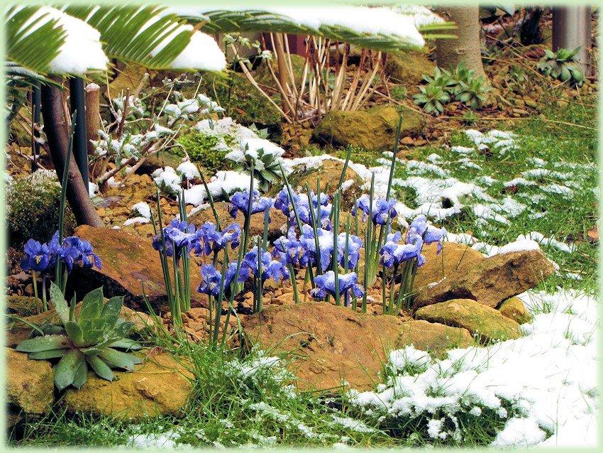 Mijn tuin in maart 2013