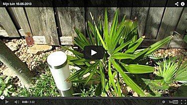 YouTube van mijn tuin in juni 2013