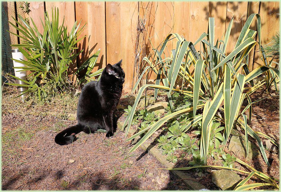 Kat geniet van de maart zon