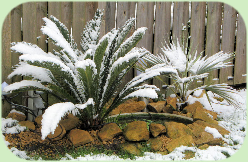 De vijver en planten in de sneeuw van eind maart.